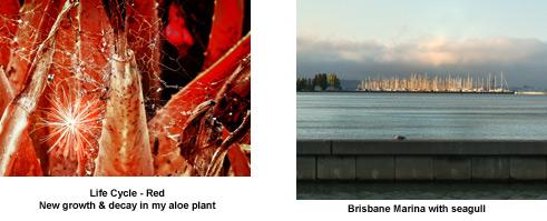 aloe-Brisbane