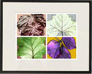 Rainbow Leaves Framed