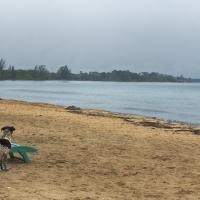 beachwithdog
