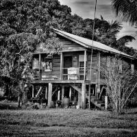 houseinthewoods