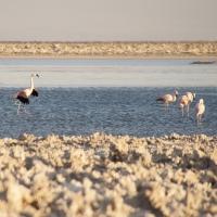 flamingos13x10-4