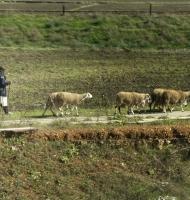 shepherdgoinghome