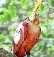roseateSpoonbill